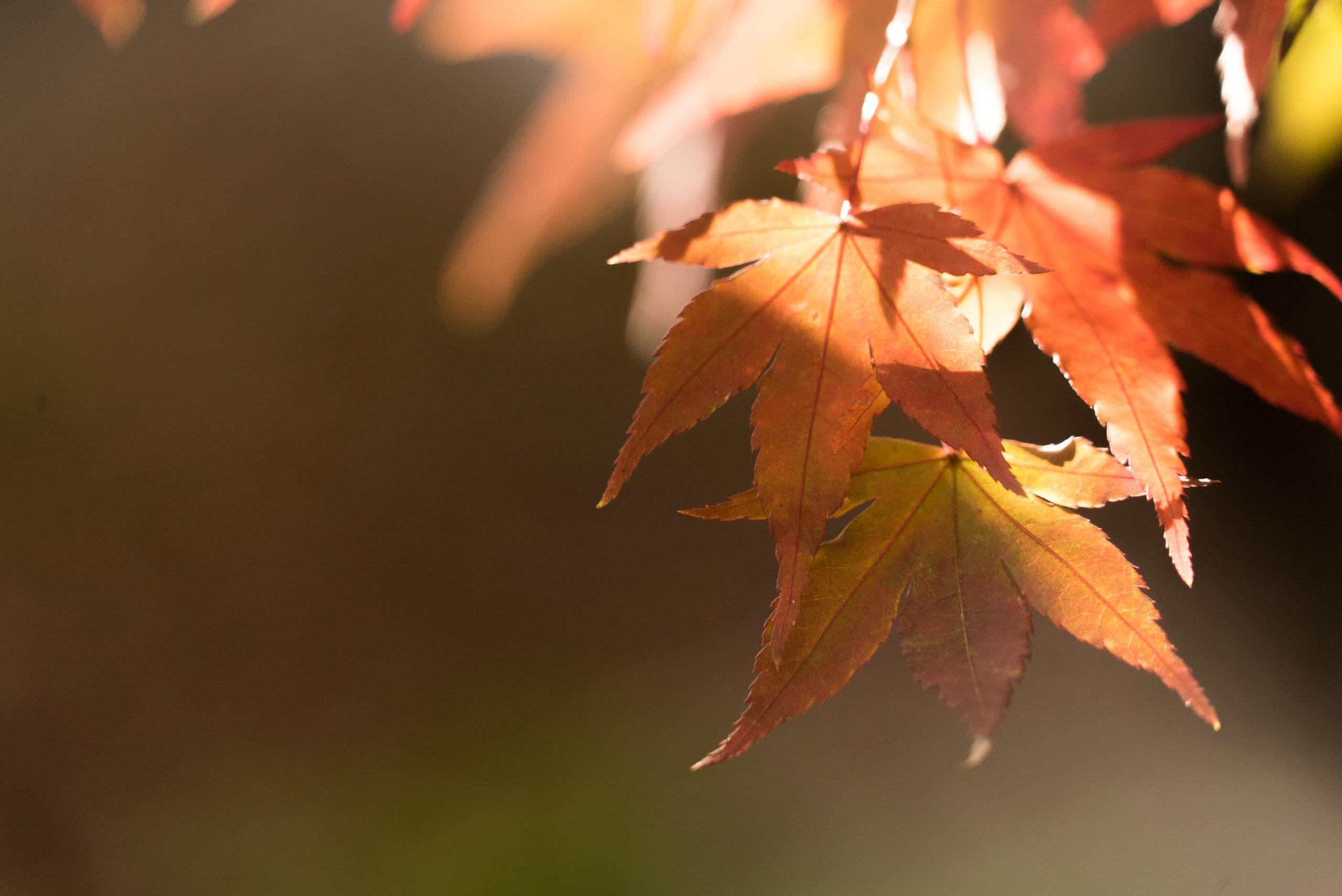 otoño mystery shopper